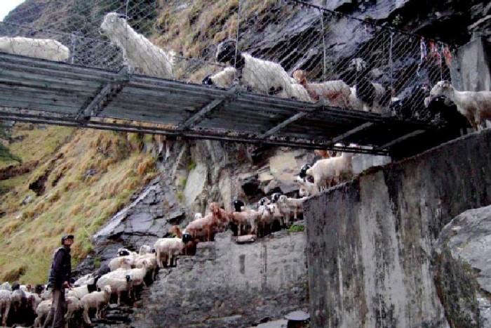 پل گاسا ۱۰ پل که عبور از آنها لرزه به اندامتان میاندازد ۱۰ پل که عبور از آنها لرزه به اندامتان میاندازد Ghasa Nepal 1