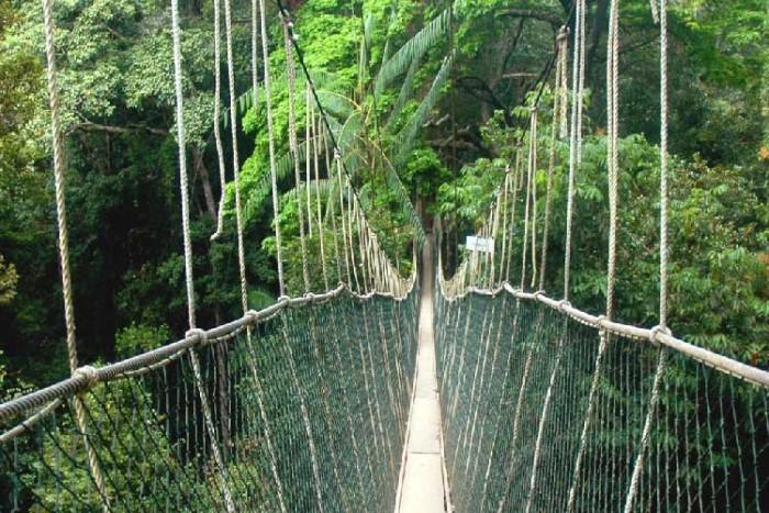 پل تامان نگارا ۱۰ پل که عبور از آنها لرزه به اندامتان میاندازد ۱۰ پل که عبور از آنها لرزه به اندامتان میاندازد Taman Negara National Park Bridge