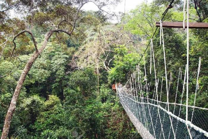 پل تامان نگارا ۱۰ پل که عبور از آنها لرزه به اندامتان میاندازد ۱۰ پل که عبور از آنها لرزه به اندامتان میاندازد Taman Negara National Park Bridge2