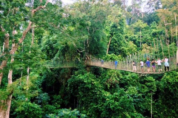 پل تامان نگارا ۱۰ پل که عبور از آنها لرزه به اندامتان میاندازد ۱۰ پل که عبور از آنها لرزه به اندامتان میاندازد Taman Negara National Park Bridge3