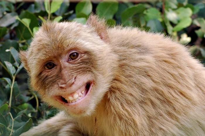 مغز میمون ۱۷ غذای خطرناک در دنیا ۱۷ غذای خطرناک در دنیا meymon