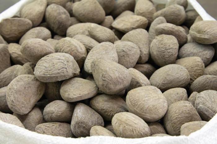 میوه pangium edule ۱۷ غذای خطرناک در دنیا ۱۷ غذای خطرناک در دنیا mivee